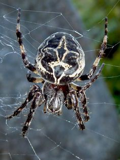 Cuaderno de Gaia. Introducción a la serie y capitulo: Telas de araña, ti...