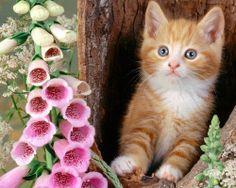 gattino-rosso-e-fiori