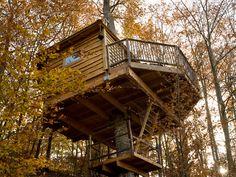 Les 5 millors cases penjades en els arbres del món.