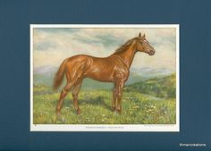 1923 Vintage Racing Thouroughbred Horse - Man of War Print by thinaircreations on Etsy
