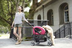 IBIYAYA 5-in-1 Combo EVA Pet Carrier/Stroller (Luxury package) Best Travel Stroller, Cat Stroller, Hedgehog Pet, Cat Dog, Cat Carrier, Pet Travel, Pet Safe, Dog Walking, Fur Babies