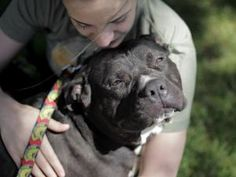 Pistachio (Gentle and Child Friendly): Pit Bull Terrier, Dog; Jersey City, NJ