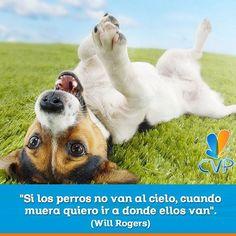 """""""Si los perros no van al cielo, cuando muera quiero ir a donde ellos van"""". (Will Rogers) #FraseDelDía #CVP  #ServiciosCVP  #Mascotas #CVP #PetLovers #Pets #Perros #Gatos #Dogs #Cats #Mascotagram #Petstagram #PetShop #DogLovers #CatLovers #NoAlMaltratoAnimal #LovePets #Instapet #ILoveMyPet #DogLife #Veterinaria"""