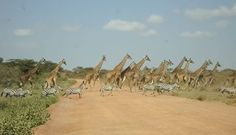 Masai Mara Honeymoon Safari Package 4 Days 3 Nights.  Email abednegoh@africahomeadventure.com