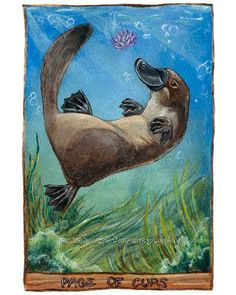 """Cute Platypus Print, Tarot Card Art, Page of Cups, 8x10 Wall Art, Animism Tarot Deck, Swimming Animal Illustration, Lotus Flower // I'm still thinking of Blue from The Raven Boys """"Blue was a fanciful but sensible thing, like a platypus"""" and the page of cups is her card.."""