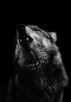 howl with me