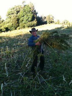 THE HEMP FARM NZ LTD Hemp Project