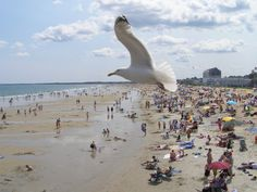 Slide Show: Summer in New England   Old Orchard Beach, Maine  photograph by Samantha White