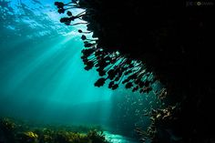 This image was taken just off the headland on the northern side of Freshwater beach. It is one of my first choice dive sites when the ocean is calm. At the right time of day, when the sun is at the right angle, it is possible to really light up some amazing underwater scenes. #underwaterphotography #diving #divemanly