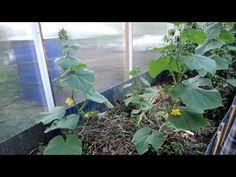 Дрожжи как удобрение: как приготовить подкормку для томатов, огурцов, цветов