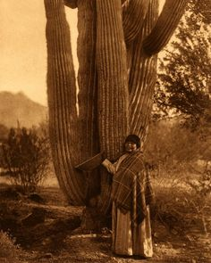 A Pima woman - This pictures gives also an idea of the size attained by the giant cactus, or saguaro. - Edward S Curtis - 1907 The Pima & (or Akimel O& also spelled Akimel O& Native American Photos, Native American Women, Native American History, Native American Indians, Pima Indians, Arizona History, Indigenous Tribes, First Nations, Nativity