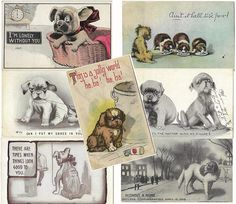 Sad Dog Vintage Postcards 7 Antique puppies and Dogs 1900s