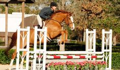 Peter Pletcher has these jumping exercises, courtesy of Practical Horseman Magazine, to help improve your horse's jumping form: http://practicalhorsemanmag.com/article/build-bascule-peter-pletcher-25497