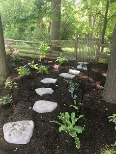 Our woodland garden