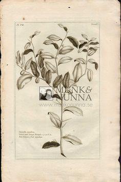 Lemon utan-basagi | Munk & Nunna | Antika Tryck