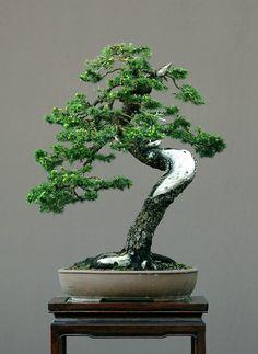 Beautiful Bonsai Tree asian personalized by SindyOriginalArt, $4.99