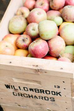 LA with Kids: Apple Picking in Oak Glen