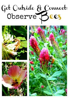 Observe Bees -- A fun activity to do with your kids! Includes links to more information and fun bee crafts for bee nature study unit's. Pinned by Learning and Exploring Through Play.