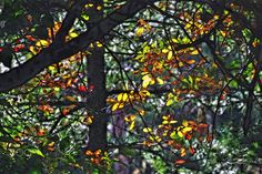 Caresse du soleil d'automne - null