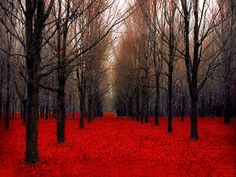 Red and black Canada forest print bold colors 24x36 by Raceytay