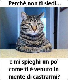 foto animali gatti 317