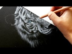How to draw white fur on black paper-colored pencil | Leontine van vliet - YouTube