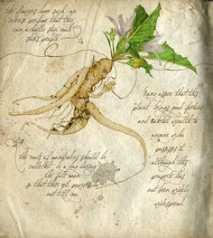 Mandrake 02 (Montse Rubio).jpg