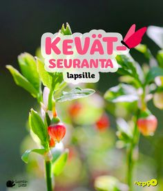 Tulostettava kevätkortti lapsille | Luonto-Liiton Kevätseuranta Teaching Science, Social Work, Art School, Mathematics, Kindergarten, Crafts For Kids, Classroom, Education, Learning