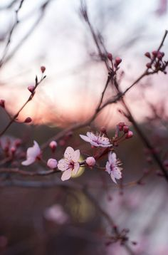 blossom ish pretty pink and japanese? Flowers Nature, Beautiful Flowers, Spring Blossom, Pretty Pictures, Mother Nature, Planting Flowers, Nature Photography, Bloom, Wallpapers