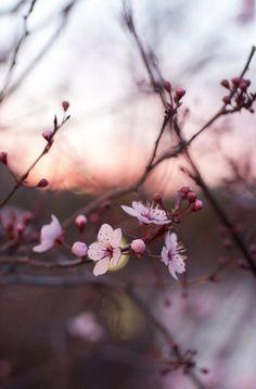 Blossom... Spring mood... Bokeh