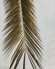 #Rota #chunitextiles #mood #inspiration #palmeras #spain #cadiz #traveling #lifestyle #summer Plant Leaves, Around The Worlds, Mood, Abstract, Artwork, Nature, Inspiration, Instagram, Palm Trees