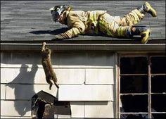 firefighter saving a kitty Save Animals, Animals And Pets, Crazy Cat Lady, Crazy Cats, Kittens Cutest, Cats And Kittens, Firefighter Humor, Neko, Cat Boarding