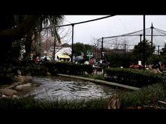 Earthquake at the Tokyo Ueno Zoo   地震に驚くハシビロコウ  -----------  あの日、ハシビロコウも怖かったんだね。