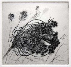 Flora McLachlan-  Seednest    Etching  Signed, titled and numbered.  Edition of 100    Plate size 70mm x 70mm  Paper Size 190mm x 190mm        Limited edition etching: £60.00