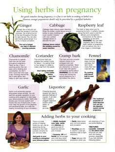 Using herbs in pregnancy
