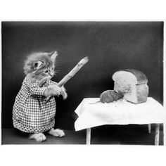 Posts about Harry Whittier Frees written by Cool Cats, Cute Funny Animals, Funny Cats, Cat Dressed Up, Vintage Cat, Beautiful Cats, Crazy Cats, Cat Art, Cats And Kittens