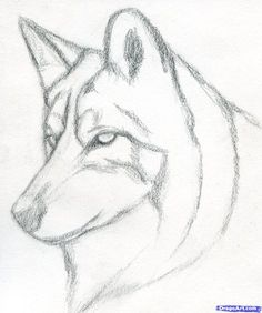 Easy pencil drawings for beginners. how to draw a wolf head, mexican wolf step 3 Easy Pencil Drawings, Pencil Drawings For Beginners, Pencil Drawing Tutorials, Cute Drawings, Drawing Sketches, Drawing Ideas, Drawing Guide, Face Sketch, Drawing Art