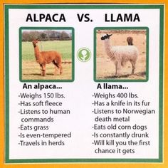 Obviously the person that made this has never met a llama or an alpaca. Idjits. ♀️♀️