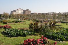 The Reggia of Venaria Reale, Turin, Turin, Piedmont, Italy