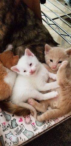 Box full of kitty love