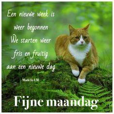 Een nieuwe week is weer begonnen We starten weer fris en fruitig aan een nieuwe dag Fijne maandag