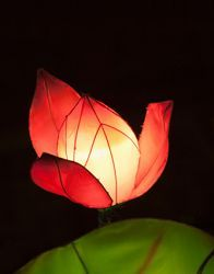 DIY floating lotus wish lantern