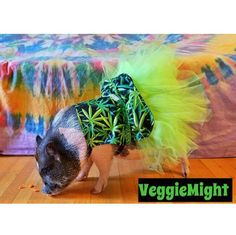 VeggieMight is a Superstar in her Mary Jane Tutu Dress!! So Fab!!