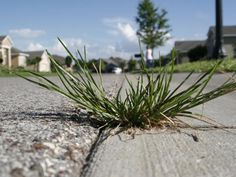 Kill weeds naturally with vinegar - spray in the cracks in your driveway - walkways - mix undiluted vinegar with a squirt or two of dishwashing soap - spray weeds till the disappear