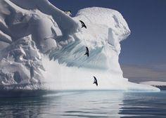Penguins!!