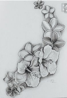 Image Result For Black And Grey Plumeria Tattoo Hawaiian Flower Tattoos Tropical Flower Tattoos Hibiscus Tattoo