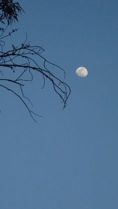 #luna #ramas