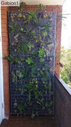 gabion green wall after planting, makes a beautiful vertical garden. http://www.gabion1.com