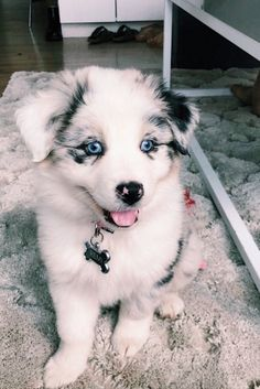 Super Cute Puppies, Baby Animals Super Cute, Cute Little Puppies, Cute Little Animals, Cute Dogs And Puppies, Cute Funny Animals, Baby Dogs, Doggies, Baby Animals Pictures