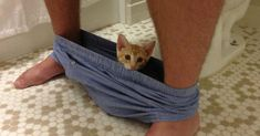 10+ Funny Cats That Love To Hang Out In Your Underwear | Bored Panda